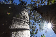 Point of view (LSydney) Tags: flickfriday pov trees sun manlydam pointofview