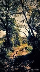 IMG_20180916_105610 (Željko V. Mitić) Tags: september outdoors nature naturephotography village countryside sunny sunnyday morning tree trees ladnscape landscapes landscapephotography