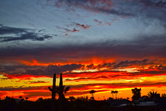 Tonight's Arizona Sunset (oybay©) Tags: sunset arizona cactus silhouette color colors weather fall