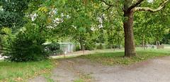 A London Plane Tree Looks Over Number 1 Pond. Hampstead Heath (standhisround) Tags: fencedfriday fence hampsteadheath pond trees tree northwestlondon london uk england leaves nature scenic path fabulousfoliage foliage walk bush shrubs grass hff londonplane