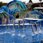Dolphins thumbnail