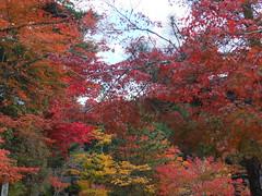 a (44) (hiromi89) Tags: japan beauty beautiful scenery flower wood pond