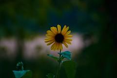 Houston Arboretum Trip (curious.analyst) Tags: flower macro houston arboretum houstonarboretum bee