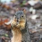 Exciting Day With Squirrels in Ann Arbor at the University of Michigan (August 21st, 2018) thumbnail