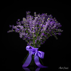 Lavender bouquet (Magda Banach) Tags: canon canon80d lavender sigma150mmf28apomacrodghsm blackbackground bouquet bow buds colors flora flower flowers macro nature plants ribbon violet