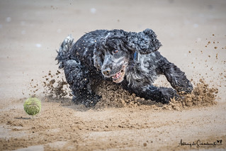 Scramble in the Sand