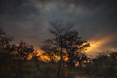 Khama Sunrise