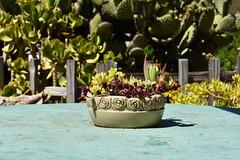 Flower Pot (nick.amoscato) Tags: ca california bigsur