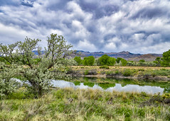Utah Landscape (Daveyal_photostream) Tags: grass sky lanscape tree water mountain mountains field coloradoriver nikon d850 clouds