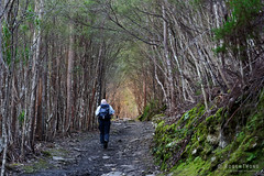 20180908-05-Radford and Zig Zag tracks on Mt Wellington (Roger T Wong) Tags: 2018 australia ferntree hobart rogertwong sel24105g sony24105 sonya7iii sonyalpha7iii sonyfe24105mmf4goss sonyilce7m3 tasmania bushwalk portrait trees tunnel