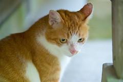 a cat (takapata) Tags: sony sel90m28g ilce7m2 cat neko 猫さん