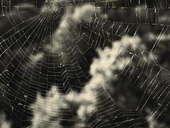 Паутина осени / Cobweb of autumn (Владимир-61) Tags: осень сентябрь паутина autumn september web nikon coolpix p600 natureinfocusgroup