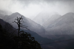Undercrowded (Elios.k) Tags: horizontal outdoors nopeople view landscape mountains winter mountainrange dof depthoffield focusinforeground backgroundblur mist misty visibility sky clouds cloudy weather tree baretree crow bird silhouette forest colour color travel travelling vacation canon 5dmkii camera photography december 2017 yamadera temple risshakuji shinto tendai buddhism yamagata yamagataprefecture tōhokuregion tohoku honsu asia japan