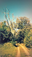 IMG_20180916_105454 (Željko V. Mitić) Tags: september outdoors nature naturephotography village countryside sunny sunnyday morning tree trees ladnscape landscapes landscapephotography