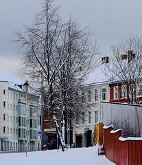 Trondheim dressed in snow (Morten Eesti) Tags: town city tree winter snow trondheim norge norway norwegen