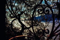 90-03 gitt capri ag30-087 (ulrich kracke (many thanks for more than 1 Mill vi) Tags: i amalfi capri durchblick gitter olivenhain sidelit