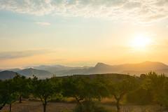 Almendros al amanecer (munover) Tags: d3400 monovar alicante elda paisaje árbol almendros amanecer nubes cielo
