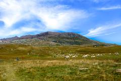 Alpe d'Huez (SparkyPlayground) Tags: alpe dhuez nature paysage landscape soleil sunny eau water montagne mountain cloud nuage pelouse ciel champ route animal