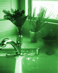 Kitchen Sink (H o l l y.) Tags: lomography kodak instamatic 110mm film analog green sink kitchen plants flowers window onions growing faucet domestic home house retro indie vintage grain