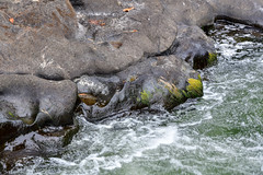 20180825_Tumwater Falls State Park-6 (Colin 腳蹤) Tags: tumwaterfalls tumwater falls washington olympia green rocks colin wong runningwater park statepark whitewater