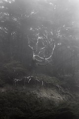 Ghost in the Fog (SkylerBrown) Tags: atmosphere creepy dark fog forest moody nature ominous pacificnorthwest travel tree washington woods