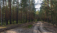 Forest road (dmilokt) Tags: природа nature пейзаж landscape лес forest дерево tree дорога road dmilokt