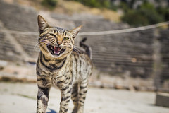 20180909_F0001: Kittens, no matter how small or cute, are still little tigers (wfxue) Tags: cat kitten feline eyes ears fur whiskers teeth sharp pet animal