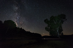 Granadilla  080718-3017 (Eduardo Estéllez) Tags: eucalyptus swamp reservoir shore milkyway night sky forest stars star background galaxy space over nature trees tree landscape travel silhouette outdoor nighttime universe astrophotography astronomy granadilla extremadura spain caceres beautiful dark beauty summer starry light natural colorful bright outer black blue cosmos nebula scene science vialactea gabrielygalan estellez eduardoestellez