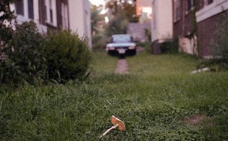 midtown mushroom
