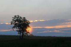 Au chant du coq (Croc'odile67) Tags: nikon d3300 sigma contemporary 18200dcoshsmc paysage landscape nature nuage ciel cloud sky levéedesoleil arbre tree sunrise