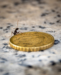 the ant preparing the autumn (F. Javier G. Vialard) Tags: macro ant coin otoño