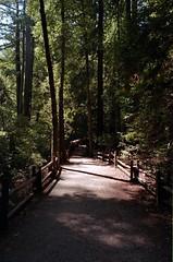 Scan-180919-0002 (alberthuynhphoto) Tags: big basin redwoods redwood state park 35mm fujifilm fuji superia 200 iso film nikon f3