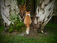 Time Out! (jlynfriend) Tags: phonephoto lg tree lawn brush fence cat harrytweedledee morning nature surroundings growth art illustration
