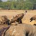 Nulla va sprecato dell'elefante!