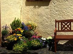 gemütliches Eckchen (dorisgoebel) Tags: blumen flower bank bunt colorful sommer summer