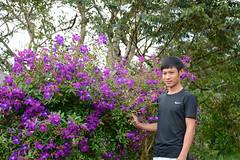 _DSC6697 (Quyr) Tags: dalat vietnam green smoke frog cloud tree forest langbiang lamdong portrait thunglungvang duonghamdatset