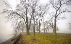 fog rising 2 (DeZ - photolores) Tags: guelphcanada royalcitypark fog mist trees hdr nikon nikond610 nikkor nikkor1424mmf28 nature dez