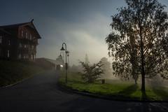 September morn (e-box 65) Tags: september morning fog mist trees hotel oslo holmenkollen norway scandinavia d7200 18 105 dew