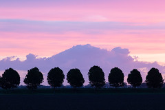 Eight in a row (ulbespaans) Tags: sunset pastel trees silhouette landscape landscapephotography landscapephotohub landscapephotomag treemagic treecaptures clouds dawn background mood moodysky