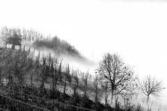 Autumn is coming.. (armandocapochiani) Tags: monochrome beauty bn bianconero blackwhite landscape tree winter fog italy italia