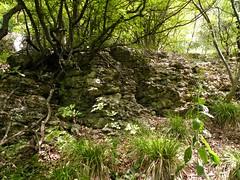 Maarata Nature Park, Bulgaria (cod_gabriel) Tags: maarata bulgaria maaratanaturepark forest padure pădure paduredefoioase foioase deciduous deciduousforest