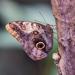 Butterfly Camouflage thumbnail