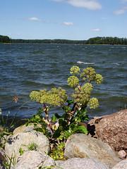 View From Sandholmsudden, Pellinki (Villa Ylle) Tags: pellinki pellinge porvoo sandholmsudden pebbles rocks onthebeach archipelago thisisfinland finland