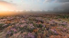 Noorderheide (© Jenco van Zalk) Tags: moor heath rural countryside sunrise fog sunlight nature landscape