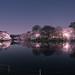 Inokashira Park Sakura in Musashino - Tokyo, Japan
