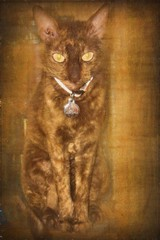 Spellbinding Face (jta1950) Tags: cat animal portrait texture eyes chat cornishrex zs100 pet