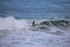 IMG_3558 (gervo1865_2 - LJ Gervasoni) Tags: surfing with whales lady bay warrnambool victoria 2017 ocean sea water waves coast coastal marine wildlife sealife blue photographerljgervasoni