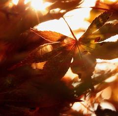 Flickr Friday: POV (Hayseed52) Tags: flickrfriday pov tree light leaves reddish color sunlight