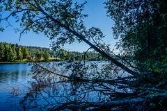 03092018-DSCF1017-HDR-2 (Ringela) Tags: hdr österdalälven leksands rastplats september 2018 sweden river nature tree fujifilm xt1
