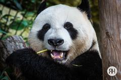 Nomnomnom (RonHui) Tags: ouwehands zoo animals dier beest dieren dierentuin